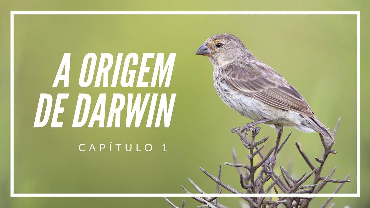 A origem de Darwin | Filosofia das Origens #1