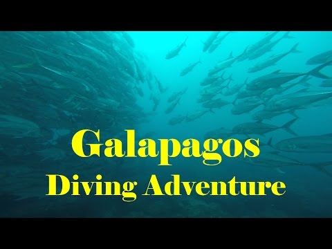 Galapagos Diving Adventure