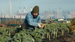 You Should: North Brooklyn Farms