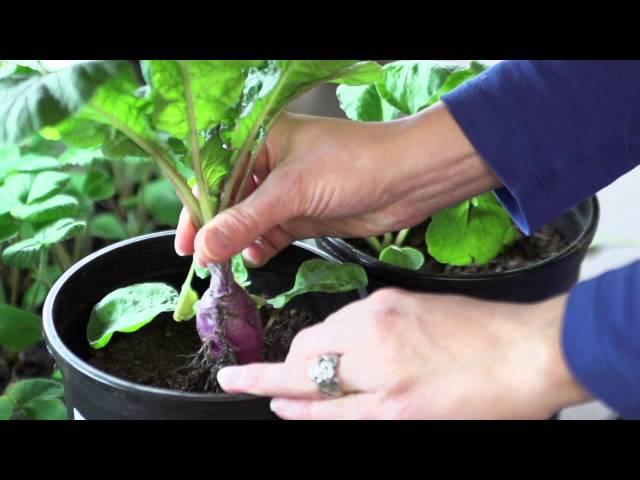 Growing Vegetables in Space