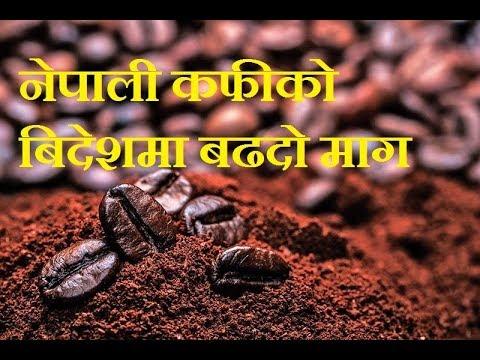 High Export of Organic Nepali Coffee