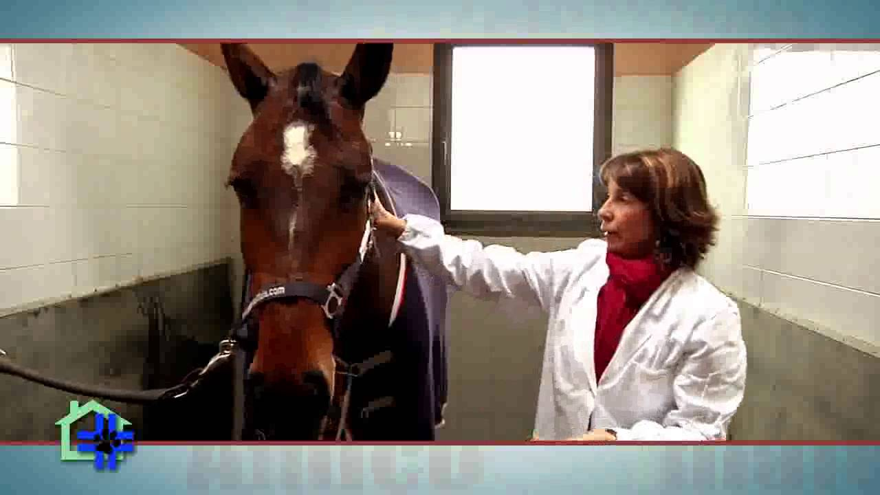 Avere un cavallo progetto amico animale youtube - Avere un cavallo ...
