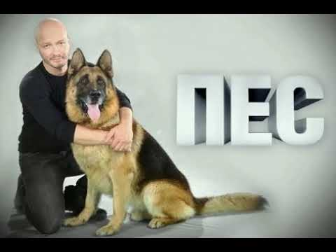 Саундтрек к сериалу пес