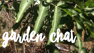 Back to Eden in the Suburbs (a chat and backyard garden tour with Erin Case)