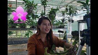 Hoa Lan Nhập Khẩu Hàng Khỏe Đẹp Bán Buôn Bán Lẻ Giá Hợp Lý - 0772947979