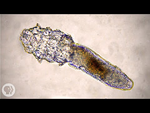 These Face Mites Really Grow on You