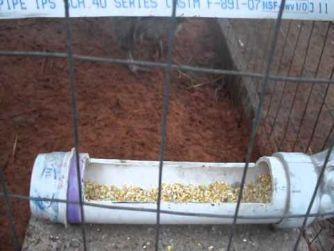 Diy Automatic Chicken Feeder Youtube