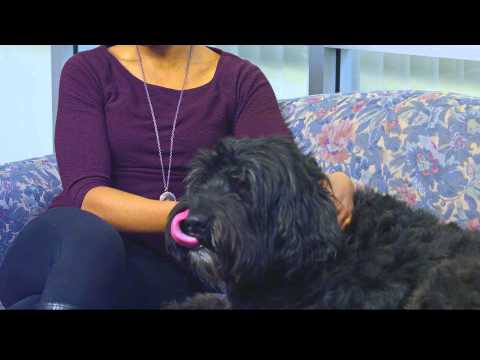 Animal Assisted Therapy: How Pet Therapy Works