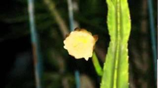 moon cactus flower animation