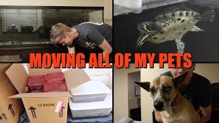 Moving My Pets to My New House!