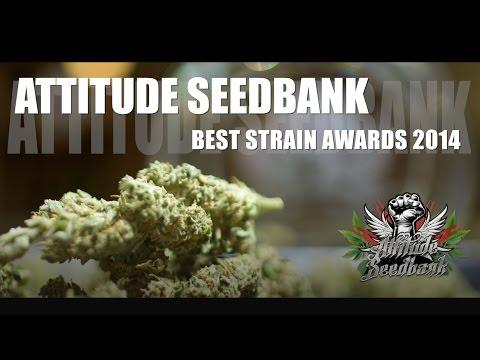 ATTITUDE SEEDBANK BEST STRAIN AWARDS 2014