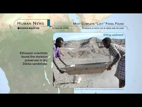 """Science Bulletins: Most Complete """"Lucy"""" Fossil Found"""