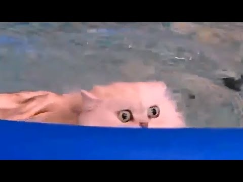 Funny Compilation. Cats are swimming in the swimming-pool. Katzen schwimmen. Кот любит плавать.