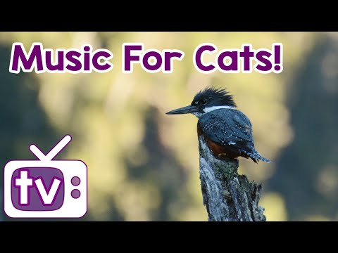 Cat TV: 8 hours! Relax my cat, music and TV! - NEW Footage!