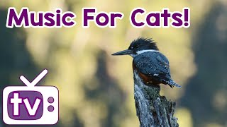 Cat TV 8 hours! Relax my cat, music and TV! - NEW Footage!