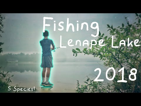 Multispecies BANK Fishing Lenape Lake NJ! (5 Species!) |May's Landing, NJ|