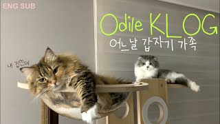"(ENG) vlog "" 주부일상 • 고양이 입양 • 성…"