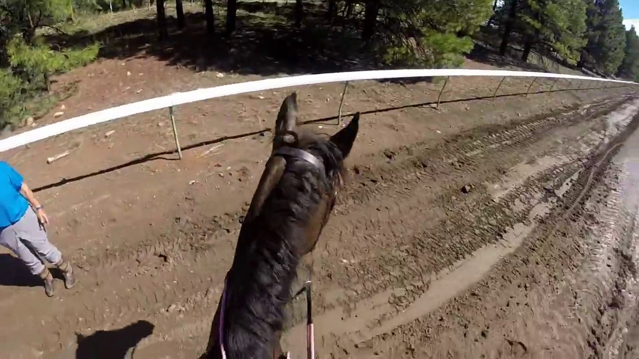 Download Jeanine Allred  and Shabang steeplechase and roads and tracks