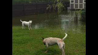 Dogs Make the Most of the Wet Weather as Florida Floods