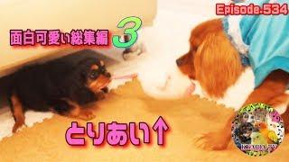 面白可愛いワンコ動画・総集編3です。 funny and cute dogs videos. 総...