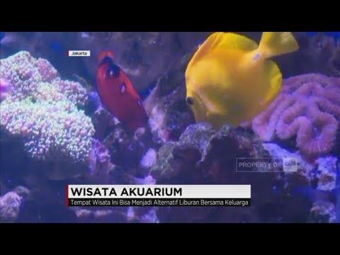 Mengunjungi Beragam Satwa Laut di Wisata Aquarium