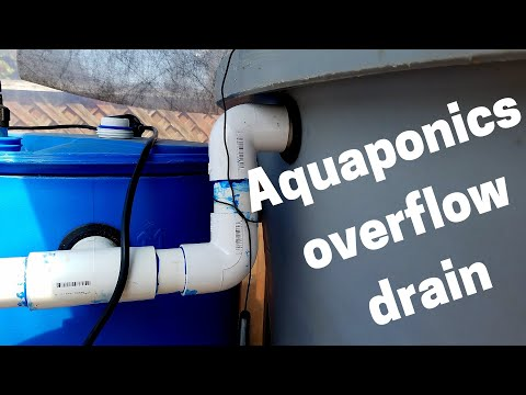 Overflow drain for an aquaponics fish tank (Hybrid aquaponic system)