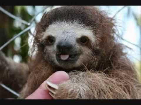 Image result for happy sloth