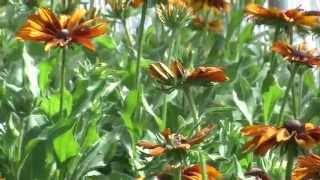 Plants that provide color in late summer