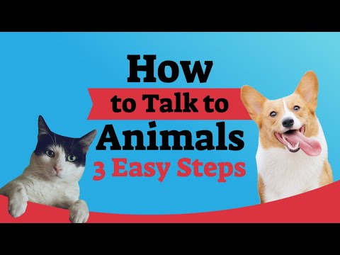 How To Talk To Animals In 3 Easy Steps By Val Heart On Real Wisdom Ted Talk Style TV