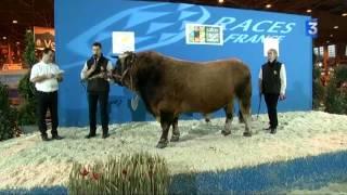 SIA 2015 : Le concours des taureaux de race Aubrac