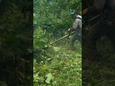 Amazon Ormanlarında 1 Gün. Ot Motoru