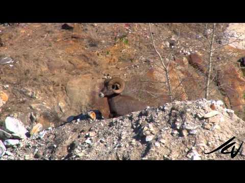 Wild British Columbia -  Adventure Travel  - YouTube