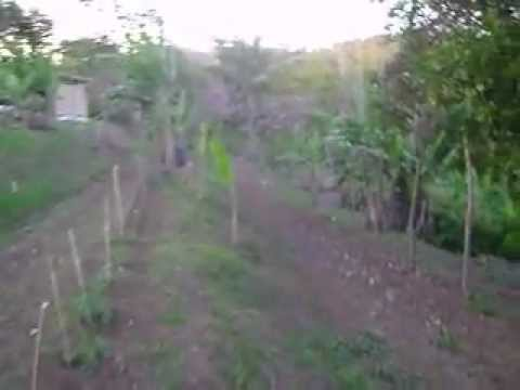 Rasta Timmer's yard tour, Hanover, Jamaica. Jan. 10, 2013