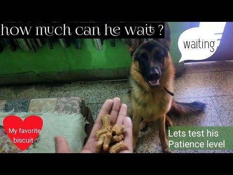 testing-mr-jojo's-patience-level