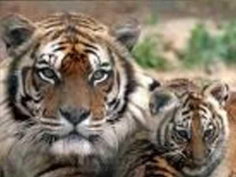 Bien-aimé animaux en voie de disparition - YouTube JU73