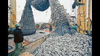 Самые Большие Уловы На Траулерах Рыболовецких Суднах с Сетью