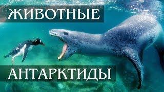 Интересные факты о животных антарктиды