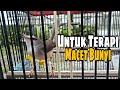 Untuk Terapi Ciblek Sawah Macet Bunyi Ciblek Sawah Gacor Pancingan Ciblek Jantan Part   Mp3 - Mp4 Download