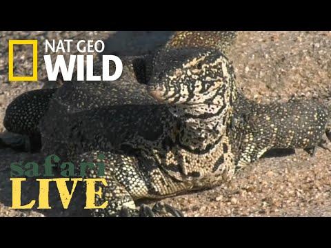 Safari Live - Day 44 | Nat Geo WILD