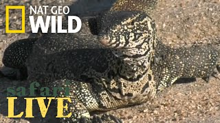 Safari Live - Day 44 | Nat Geo WILD thumbnail