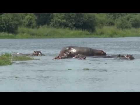 Uganda - Nile River Cruise to Bottom of Murchison Falls #5 - 24 August 2016