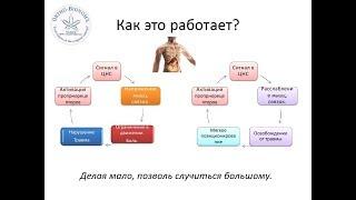 """метод """"Ортобиономия"""" от Литвиченко Евгения Михайловича"""