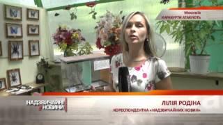 На Николаевщине на людей нападают пауки-каракурты - Чрезвычайные новости, 23.07