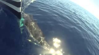 delfini a crotone