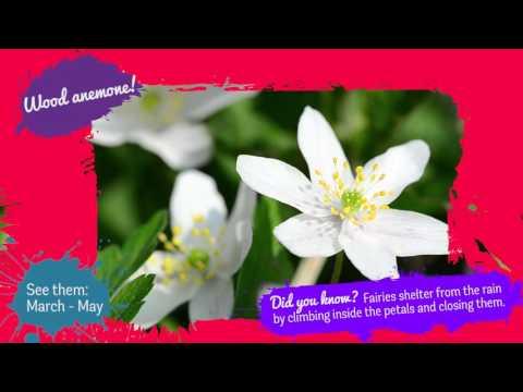 Spring Flowers Identification For Kids