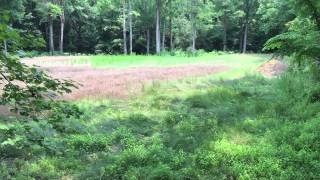 30 acres of Land For Sale in Gates County, NC: Hog Pen Stand