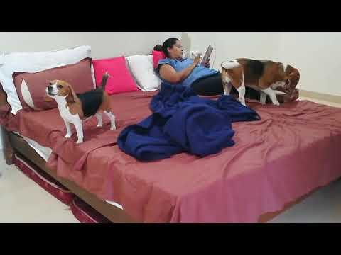 Dog Friendly Resort Review II 1873 Equestrian Lifestyle Resort II Mini Vacation