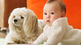 Funny Baby and Baby Animals fails - Funny Moments Live