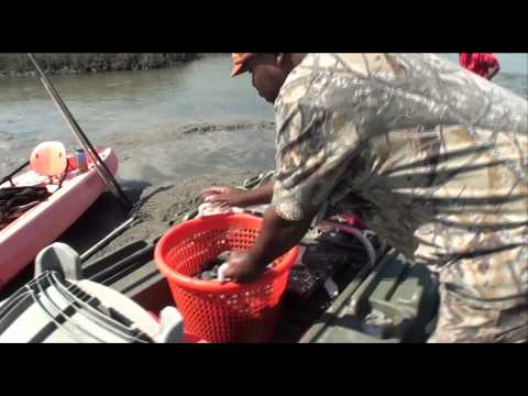 CLAMMING HOW TO