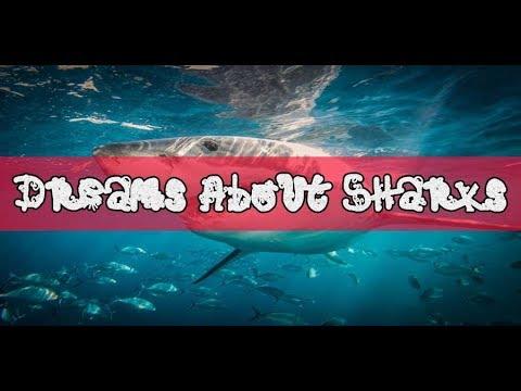 Shark Dream Meaning And Interpretation
